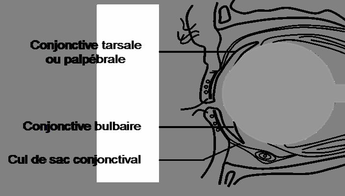 cadre photo forme de coeur 2